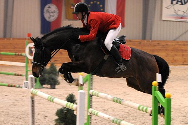 Konie Sportowe Rasy Holsztyńskiej Oldenburskiej Polski Koń