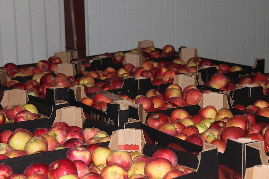 Kupić Świeże jabłka.