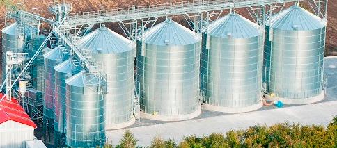 Kupić Skup kukurydzy mokrej