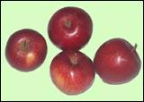 Kupić Jabłka Eliza i inne