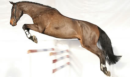 Kupić Koń Oh My Lady
