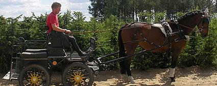 Kupić Koń Hordynka