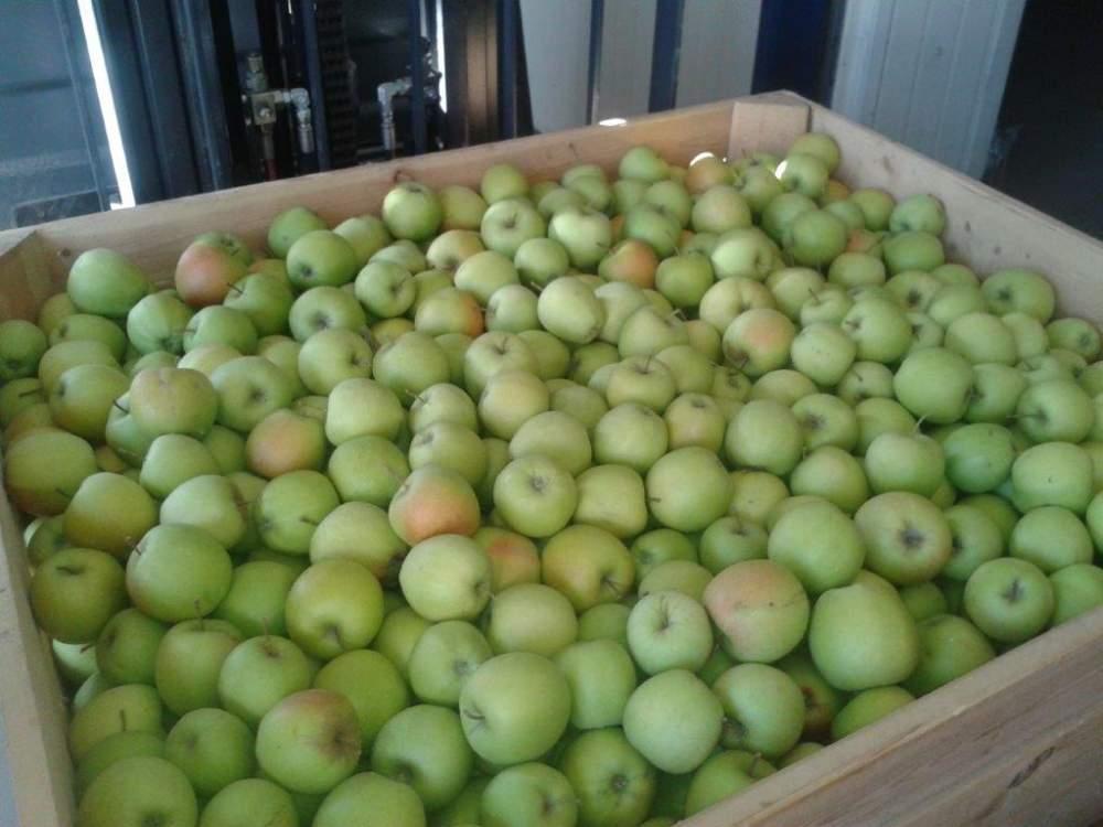 Kupić Jabłka świeże polskich odmian - Golden