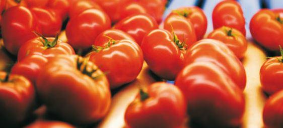 Kupić Pomidory w szklarniach