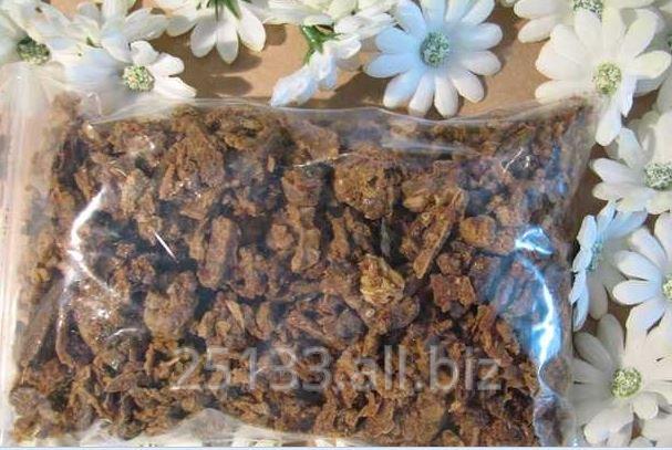 Kupić Propolis- kit pszczeli - naturalny lek