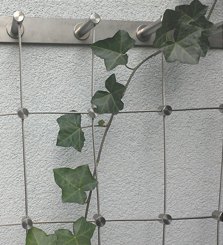 Prowadzenie roślinności na elewacji budynku