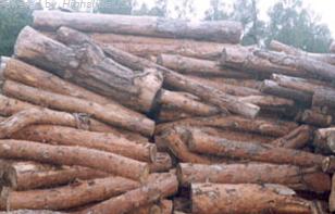 Kupić Drewno n rozpałkę sosnowe