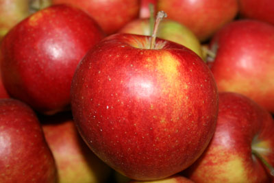 Kupić Jabłka odmiany Jonagored.