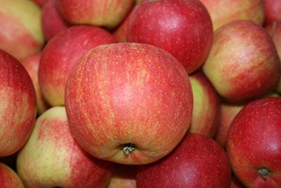 Kupić Jabłka odmiany Szampion.