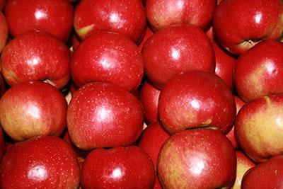 Kupić Świeże jabłka odmiany Alwa.