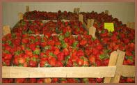 Kupić Sprzedaż truskawek deserowych.