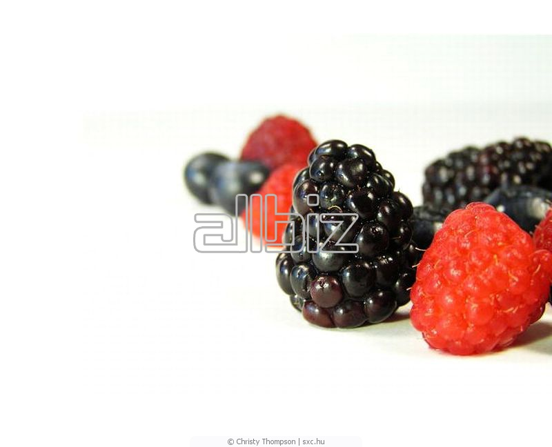 Kupić Owoce zamrożone