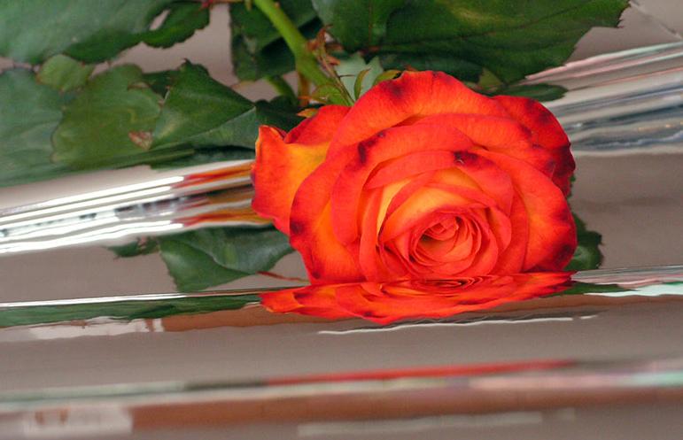 Kupić Folia metalizowana na bazie folii przeźroczystej do pakowania kwiatów
