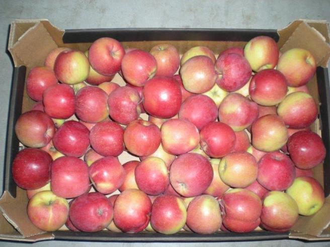 Kupić Jabłka Fuji