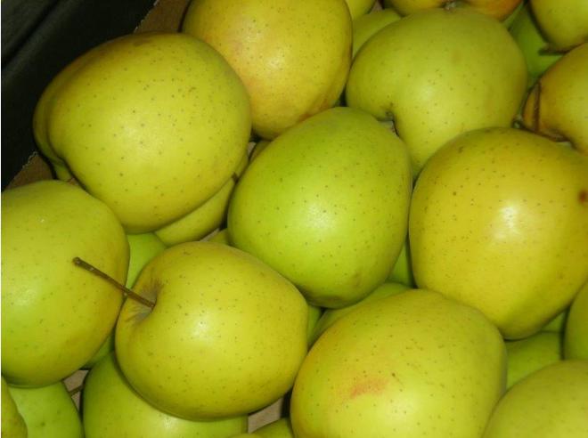 Kupić Jabłka Golden