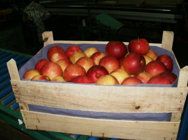 Kupić Jabłka Idared w skrzyni drewnianej