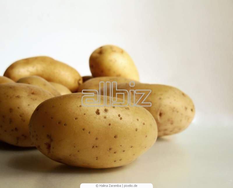 Kupić Ziemniaki różnych odmian