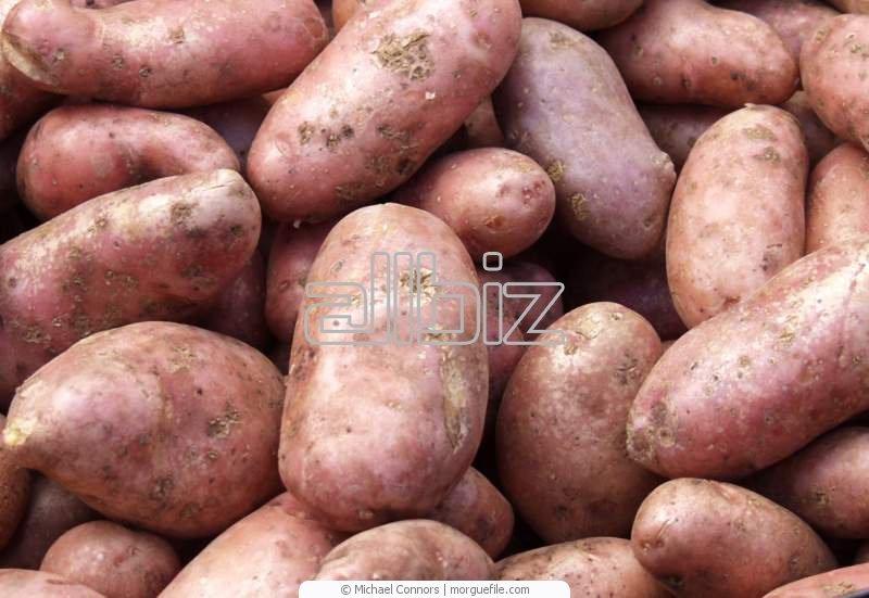 Kupić Ziemniaki wczesne