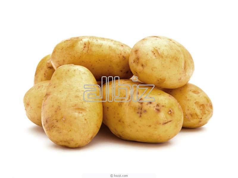Kupić Ziemniaki od polskich producentów.