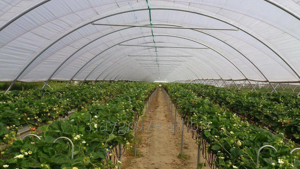 Kupić Systemy podłoży uprawowych dla truskawek
