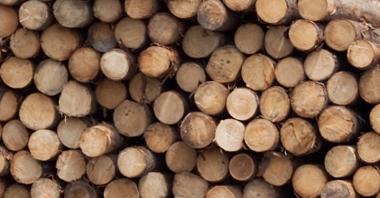 Kupić Drewno okrągłe