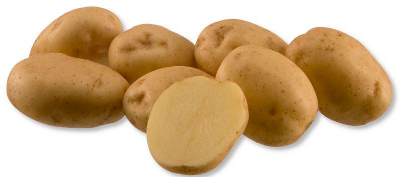 Kupić Ziemniaki Riviera , bardzo wczesna odmiana ziemniaka , ziemniak jadalny , Riviera