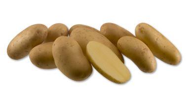 Kupić Ziemniak Erika , wczesna odmiana jadalna ziemniaka , ziemniak sałatkowy , ziemniaki