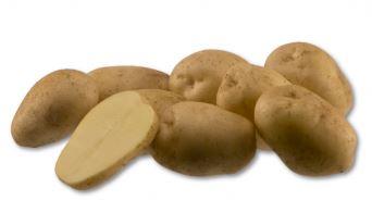 Kupić Ziemniak Premiere , wczesna odmiana ziemniaka jadalnego , ziemniak frytkowy , Premiere
