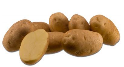Kupić Ziemniak Fontane , odmiana jadalna , ziemniaki mączyste , ziemniaki na frytki , chips , Fontane