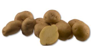 Kupić Ziemniak Saturna , ziemniaki chipsowe , ziemniak typ kulinarny , Saturna