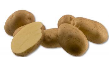 Kupić Ziemniak Markies , sadzeniaki ziemniaków , późna odmiana ziemniaka , odmiana frytkowa ziemniaka