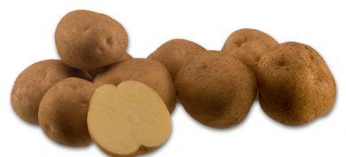 Kupić Ziemniak Signum , odmiana skrobiowa ziemniaków , sadzeniaki ziemniaka , Signum