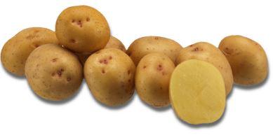 Kupić Ziemniak Destiny , odmiana chipsowa ziemniaka , średnio- wczesna odmiana , Destiny