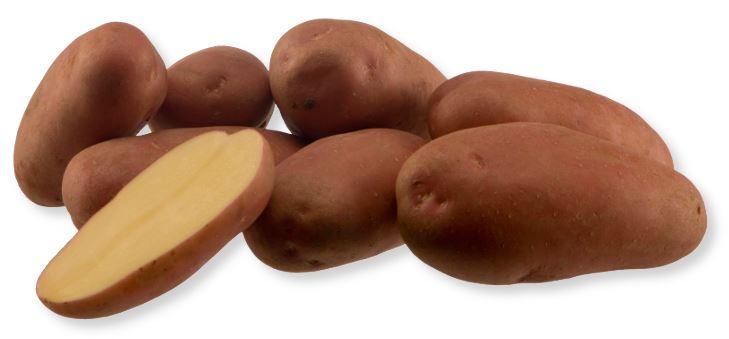 Kupić Ziemniak Manitou , jadalna odmiana ziemniaka , ziemniaki , Manitou