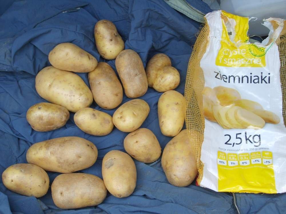 Kupić Ziemniaki stołowe