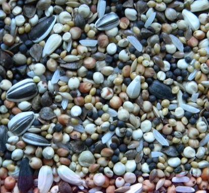 Kupić DN - mieszanka drobne nasionka , mieszanka uzupełniająca skomponowana z drobnych nasion oleistych