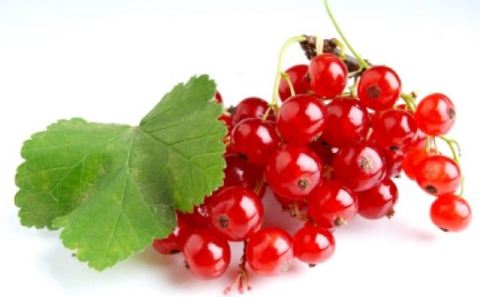 Kupić Porzeczka czerwona , owoce