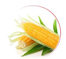 Kupić Nasiona zbóż ozimych, jarych, nasiona rzepaku, kukurydzy, traw