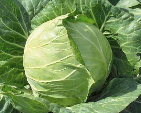 Kupić Kapusta , warzywa