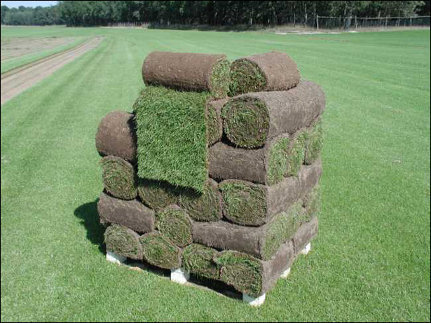 Kupić Trawnik rolowany
