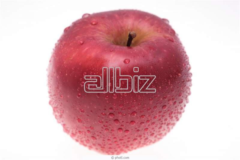Kupić Jabłka świeże