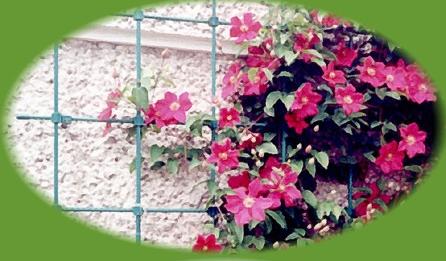 Kupić Tyczka do prowadzenia roślin po elewacji budynku