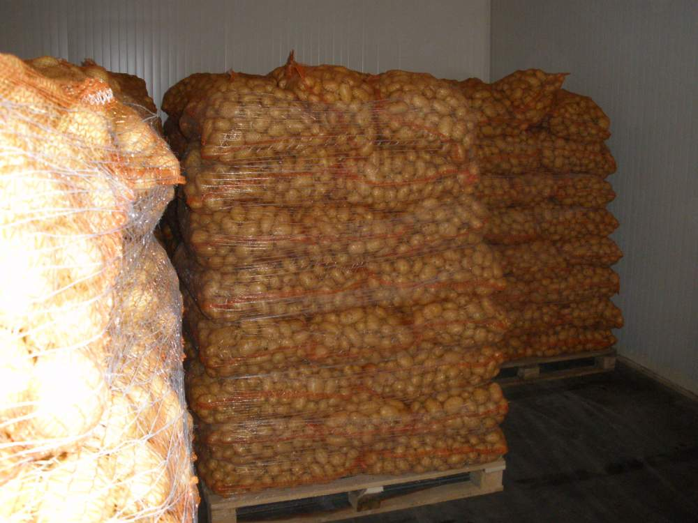 Kupić Ziemniaki młode polskie