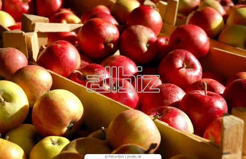 Kupić Jabłka i inne owoce