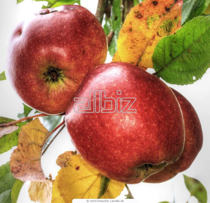 Kupić Jabłka i owoce sezonowe