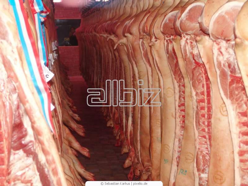 Kupić Wieprzowina, mięso wieprzowe