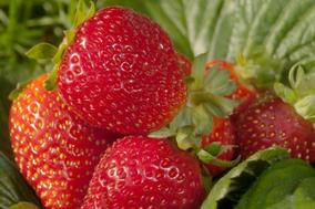 Kupić Świeże owoce truskawek.
