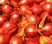 Kupić Nasiona cebuli , różne odmiany dymki sprzedaż