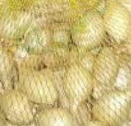 Kupić Nasiona cebuli polska , eksport
