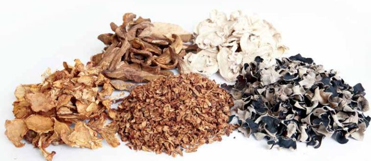 Maślaki - polskie grzyby na eksport